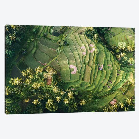 Bali Rice Paddies Aerial II Canvas Print #TEO738} by Matteo Colombo Canvas Art