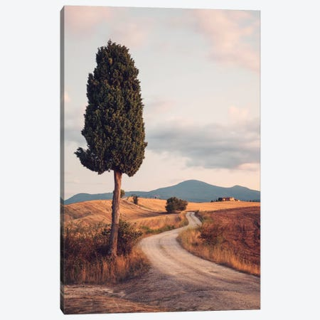 Rural Road With Cypress Tree, Tuscany, Italy Canvas Print #TEO74} by Matteo Colombo Canvas Art
