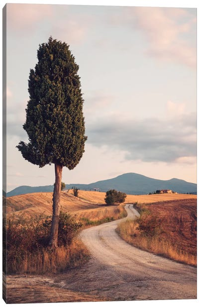 Rural Road With Cypress Tree, Tuscany, Italy Canvas Art Print