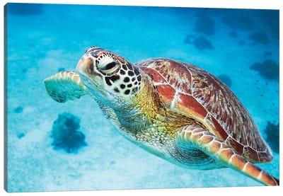 Green Turtle I Canvas Art Print