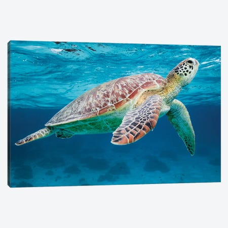 Green Turtle II 3-Piece Canvas #TEO806} by Matteo Colombo Canvas Print