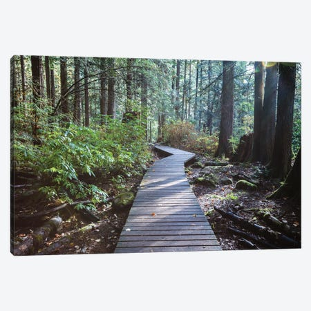 Into The Forest I Canvas Print #TEO868} by Matteo Colombo Canvas Wall Art