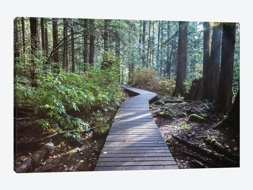 Into The Forest I by Matteo Colombo 1-piece Art Print