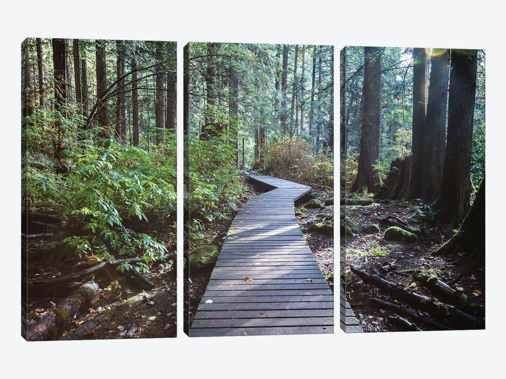 Into The Forest I by Matteo Colombo 3-piece Art Print