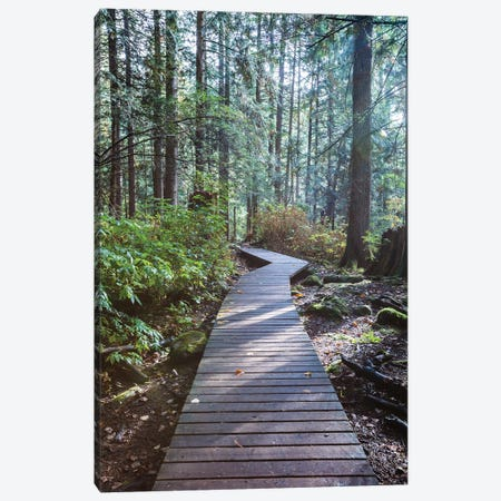 Into The Forest Ii Canvas Print #TEO869} by Matteo Colombo Canvas Wall Art