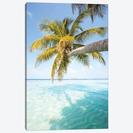 Palm Tree, Maldives Canvas Print #TEO923} by Matteo Colombo Canvas Print