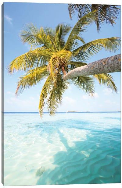Palm Tree, Maldives Canvas Art Print