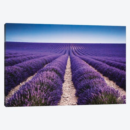 Walking In The Lavender Canvas Print #TEO929} by Matteo Colombo Canvas Art Print
