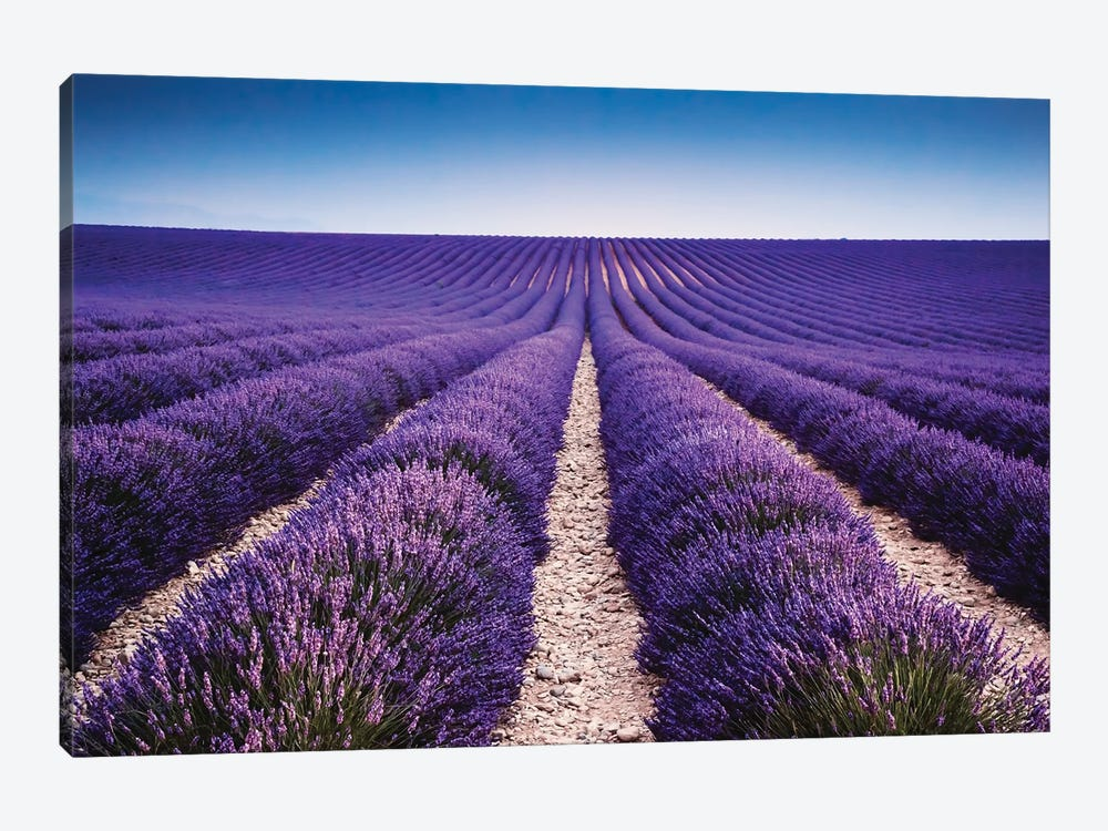 Walking In The Lavender by Matteo Colombo 1-piece Art Print