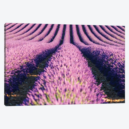 Scent Of Lavender Canvas Print #TEO971} by Matteo Colombo Canvas Artwork