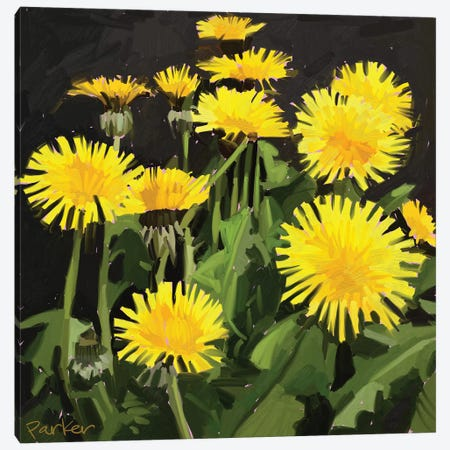 Dramatic Dandelions Canvas Print #TEP10} by Teddi Parker Canvas Artwork