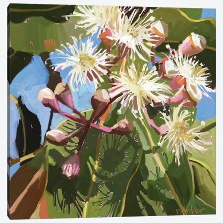 Gum Blossom Canvas Print #TEP13} by Teddi Parker Canvas Artwork