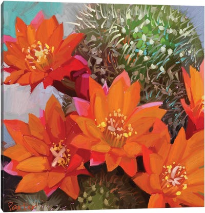 Orange Cactus Canvas Art Print