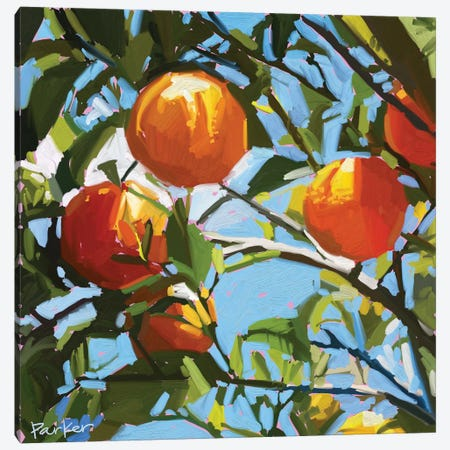 Orange Tree Canvas Print #TEP20} by Teddi Parker Canvas Art Print
