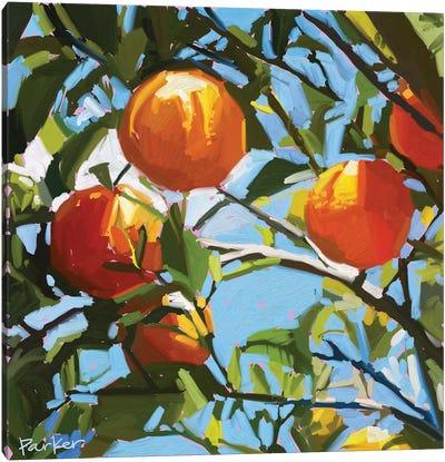 Orange Tree Canvas Art Print