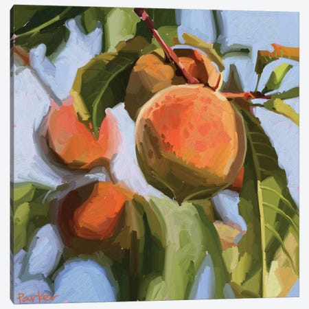 Peach Fuzz Canvas Print #TEP22} by Teddi Parker Art Print