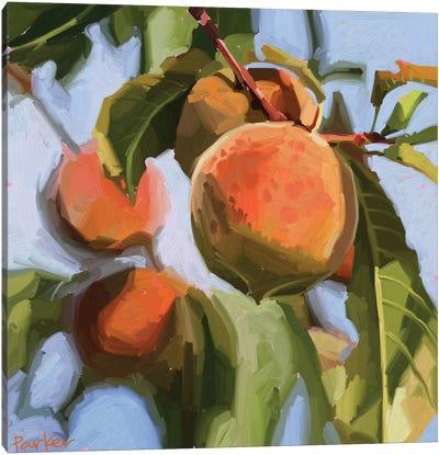 Peach Fuzz Canvas Art Print