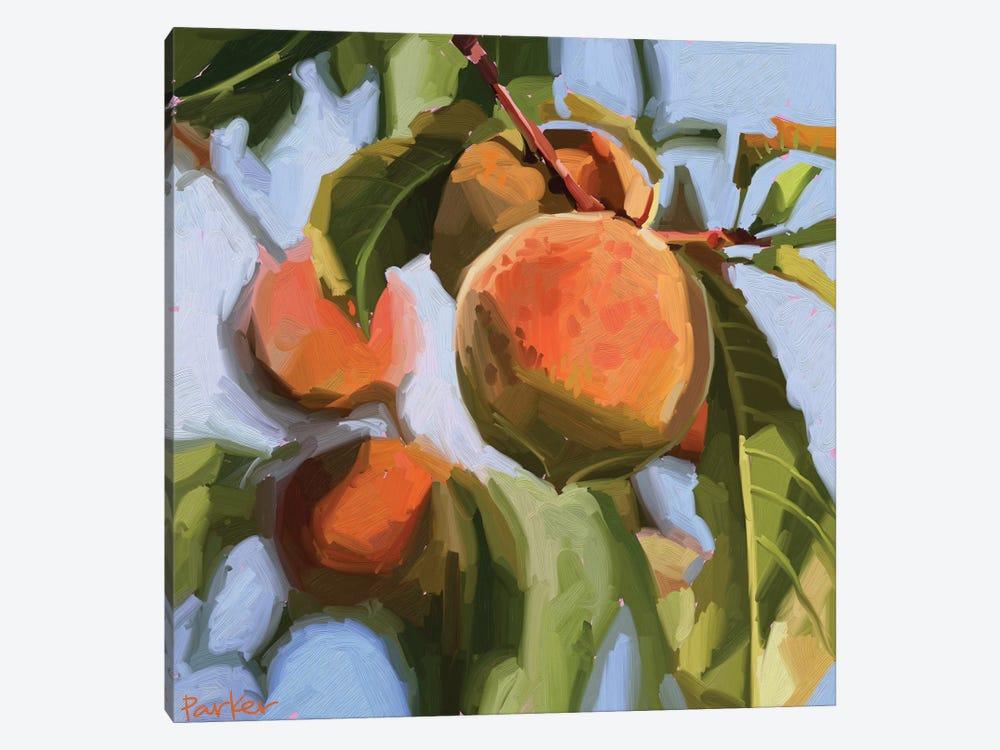 Peach Fuzz by Teddi Parker 1-piece Canvas Art Print