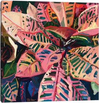 Pink Croton Canvas Art Print