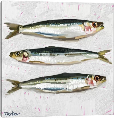 Sardines Canvas Art Print