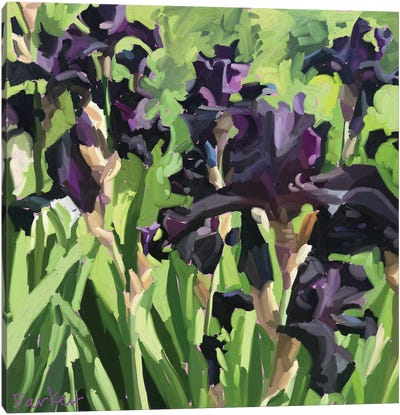 Velvet Iris Canvas Art Print
