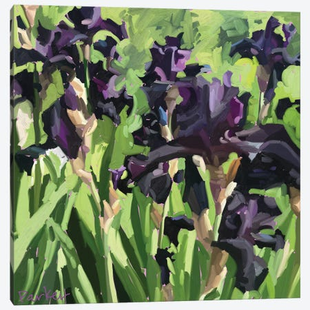 Velvet Iris Canvas Print #TEP47} by Teddi Parker Canvas Artwork