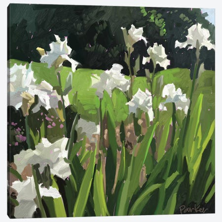 White Garden Canvas Print #TEP61} by Teddi Parker Art Print