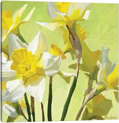 Daffodils Canvas Art Print