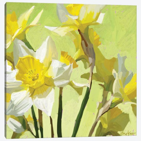 Daffodils Canvas Print #TEP7} by Teddi Parker Canvas Wall Art