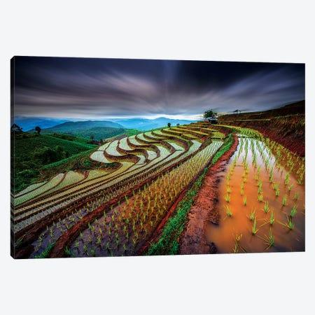 Unseen Rice Field Canvas Print #TET1} by Tetra Art Print