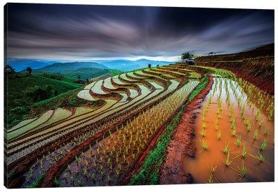 Unseen Rice Field Canvas Art Print