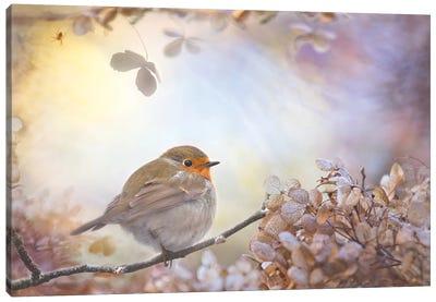 Robin On Dreams Canvas Art Print
