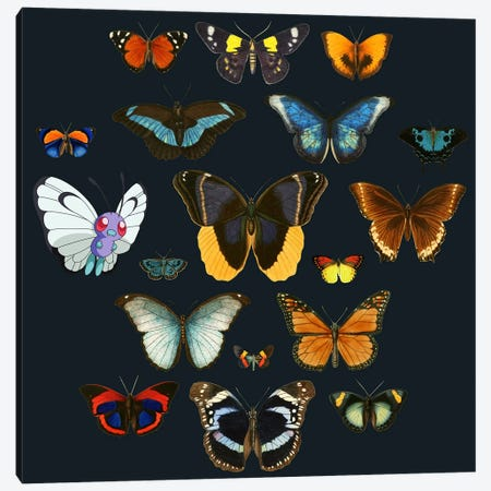 Entomology Canvas Print #TFA145} by Tobias Fonseca Canvas Art Print