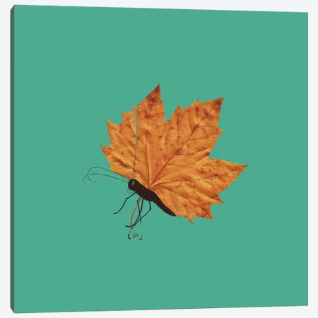 The Fall Canvas Print #TFA23} by Tobias Fonseca Canvas Artwork