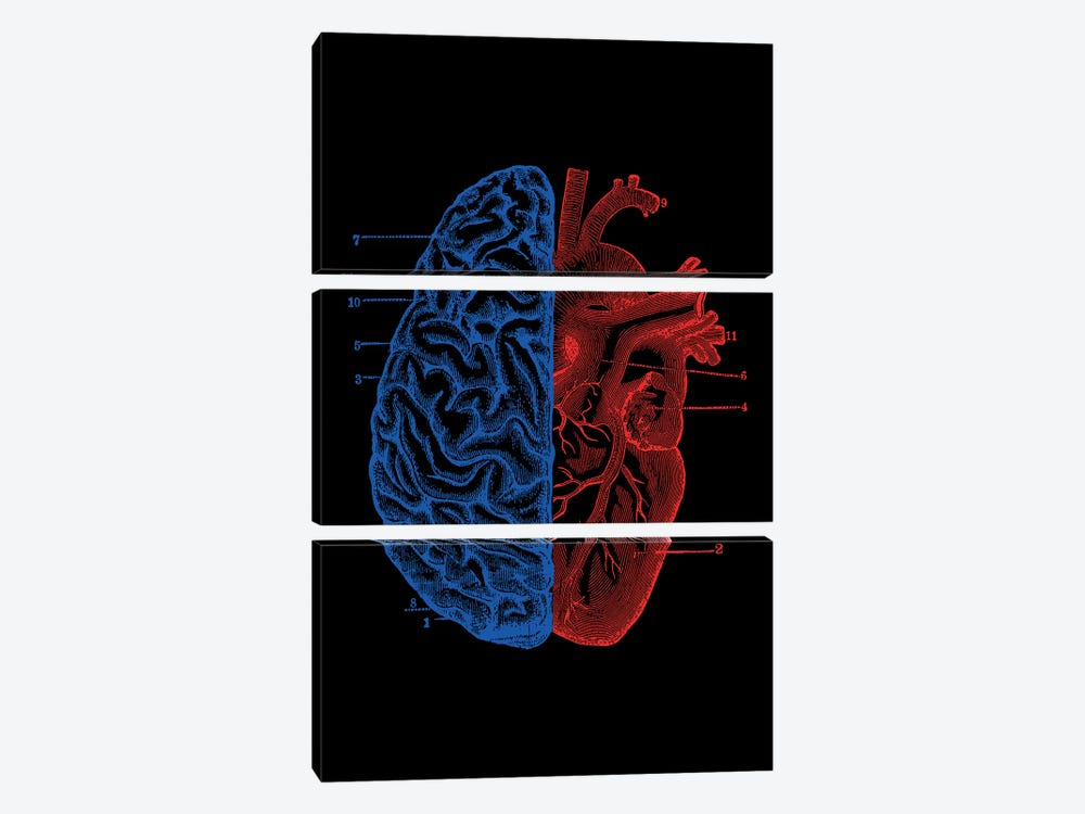 Heart And Brain, Rectangle by Tobias Fonseca 3-piece Canvas Art Print