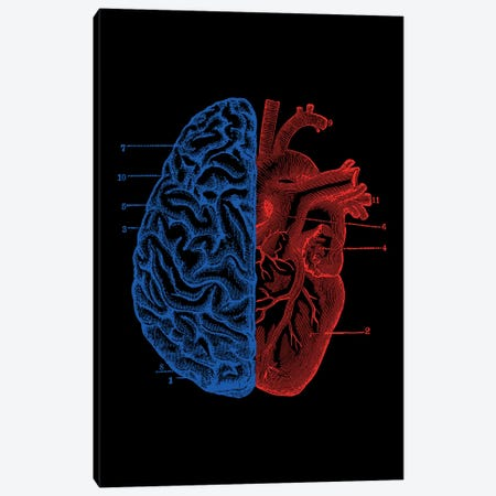 Heart And Brain, Rectangle Canvas Print #TFA296} by Tobias Fonseca Canvas Print