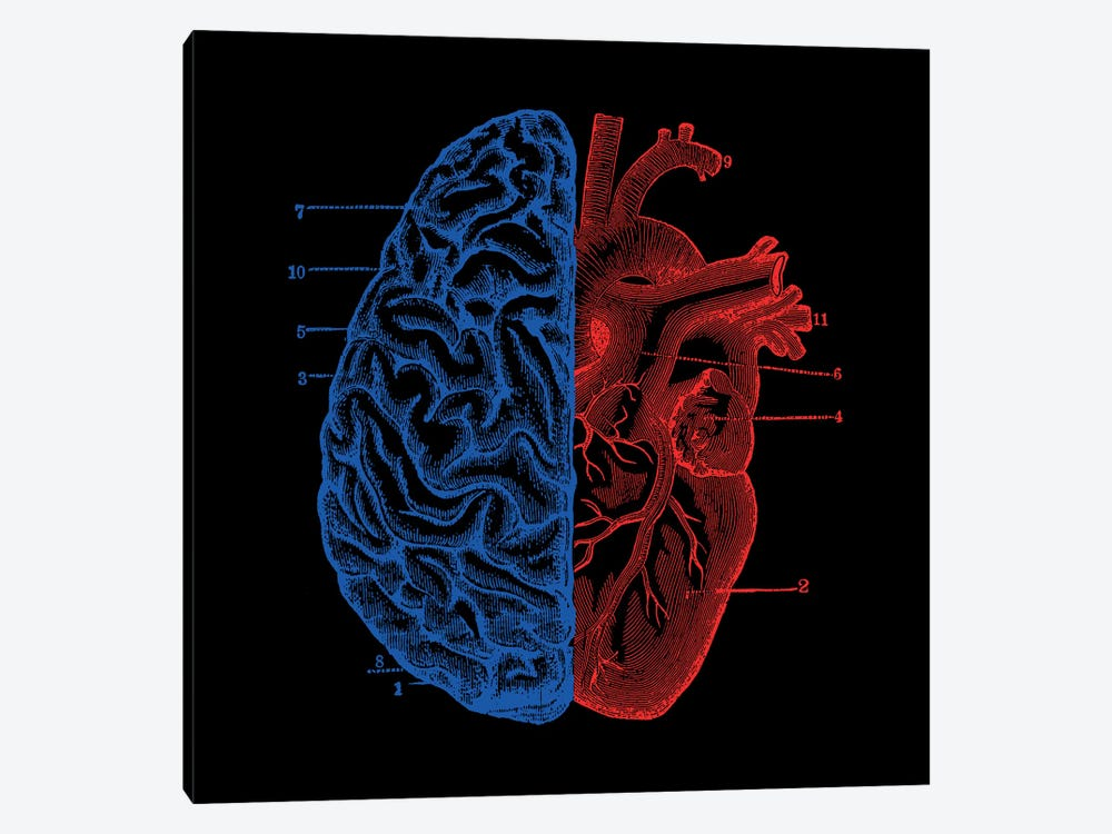 Heart And Brain, Square by Tobias Fonseca 1-piece Canvas Wall Art