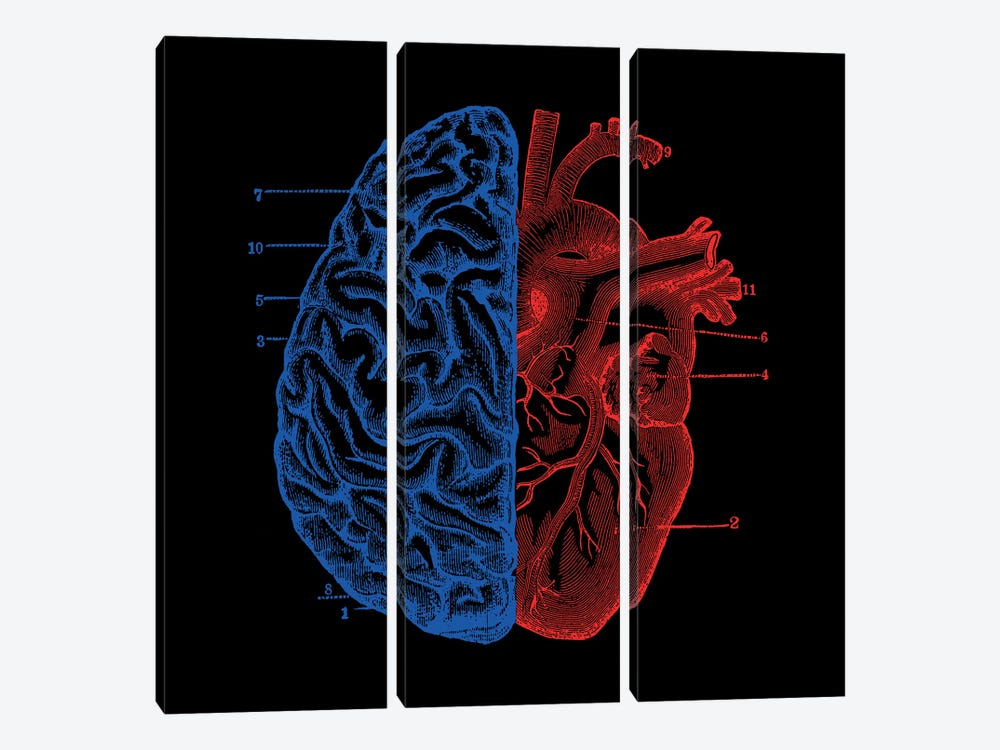 Heart And Brain, Square by Tobias Fonseca 3-piece Canvas Artwork