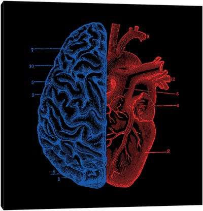 Heart And Brain, Square Canvas Art Print