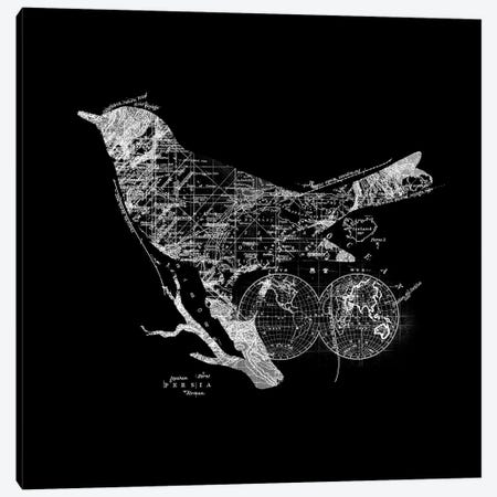 Bird Wanderlust Canvas Print #TFA384} by Tobias Fonseca Canvas Art Print