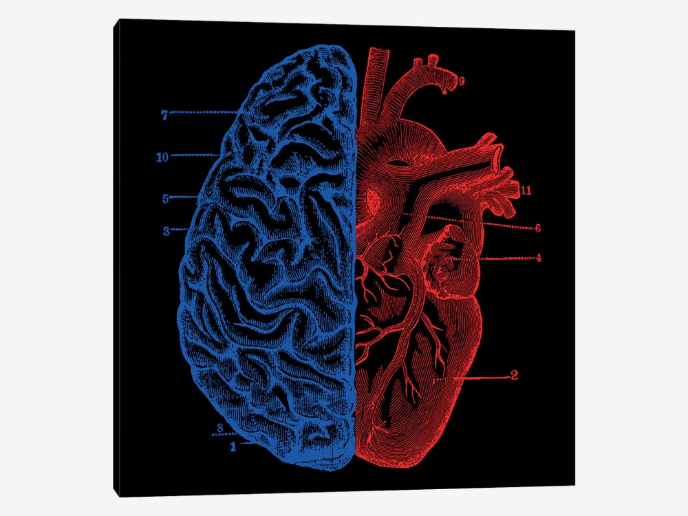 Heart and Brain by Tobias Fonseca 1-piece Canvas Art Print