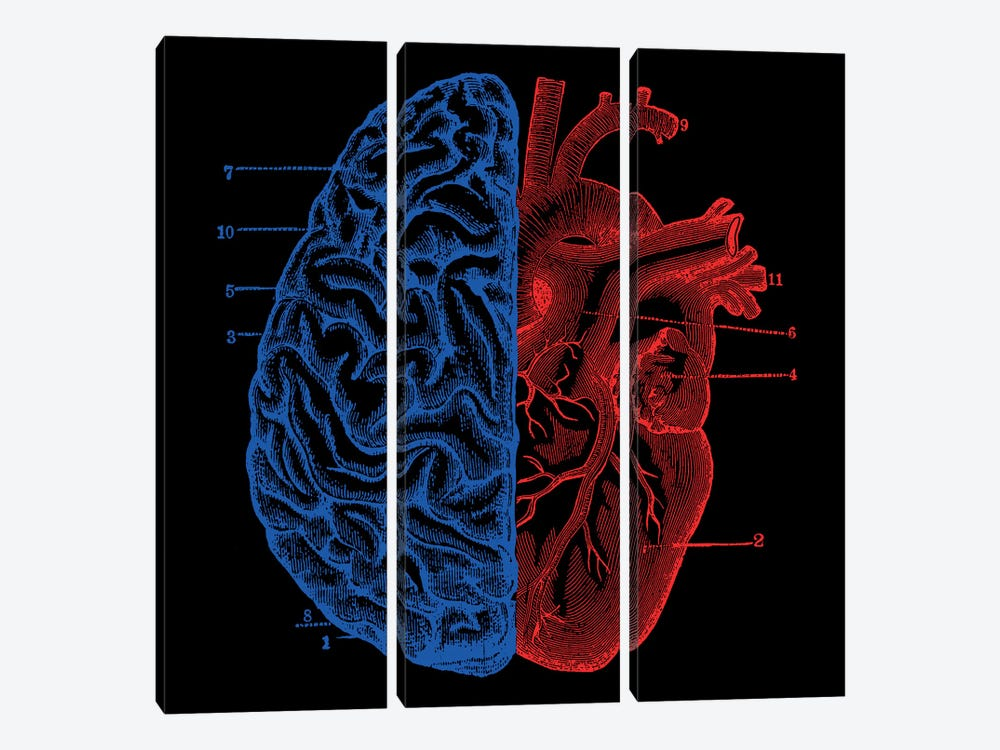 Heart and Brain by Tobias Fonseca 3-piece Canvas Print