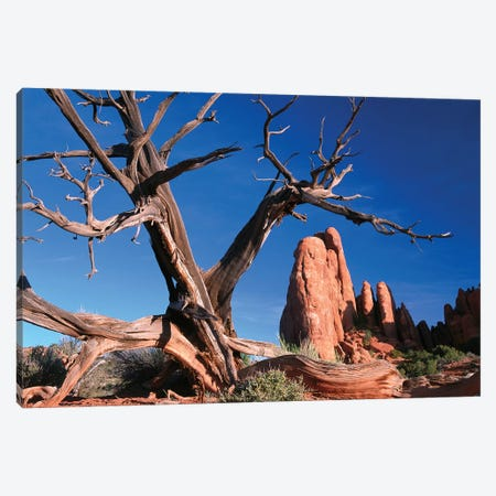 Snag In Front Of Fiery Furnace Labyrinth Showing Narrow Sandstone Canyons And Fins, Arches National Park, Utah Canvas Print #TFI1013} by Tim Fitzharris Canvas Art