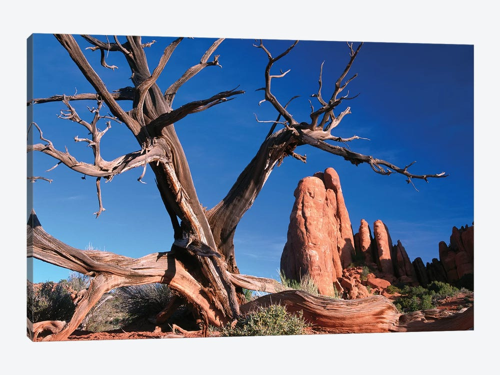 Snag In Front Of Fiery Furnace Labyrinth Showing Narrow Sandstone Canyons And Fins, Arches National Park, Utah by Tim Fitzharris 1-piece Art Print