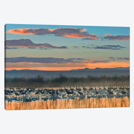 Snow Goose And Sandhill Crane Flock Silhouetted In Water At Sunset, Bosque Del Apache National Wildlife Refuge, New Mexico Canvas Print #TFI1015} by Tim Fitzharris Canvas Print