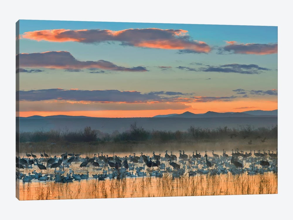 Snow Goose And Sandhill Crane Flock Silhouetted In Water At Sunset, Bosque Del Apache National Wildlife Refuge, New Mexico 1-piece Canvas Print