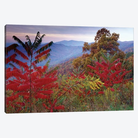Staghorn Sumac In Autumn, Blue Ridge Mountain Range, Virginia Canvas Print #TFI1027} by Tim Fitzharris Canvas Art