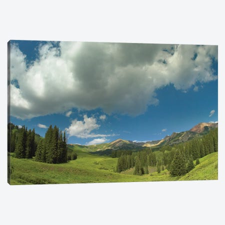 Stand Of Conifers In The Elk Mountains Near Crested Butte, Colorado Canvas Print #TFI1028} by Tim Fitzharris Canvas Art Print