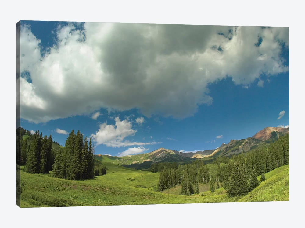 Stand Of Conifers In The Elk Mountains Near Crested Butte, Colorado by Tim Fitzharris 1-piece Canvas Print