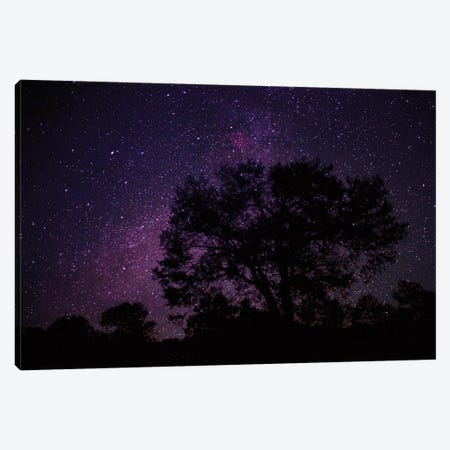 Starry Sky With Silhouetted Oak Tree Canvas Print #TFI1029} by Tim Fitzharris Canvas Print